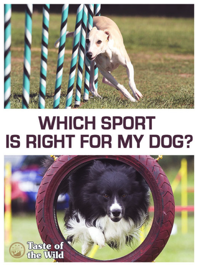 Which sport is right for my dog?