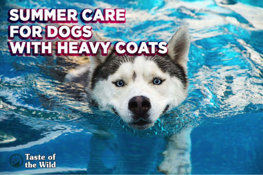 Caring for heavy coats in summer