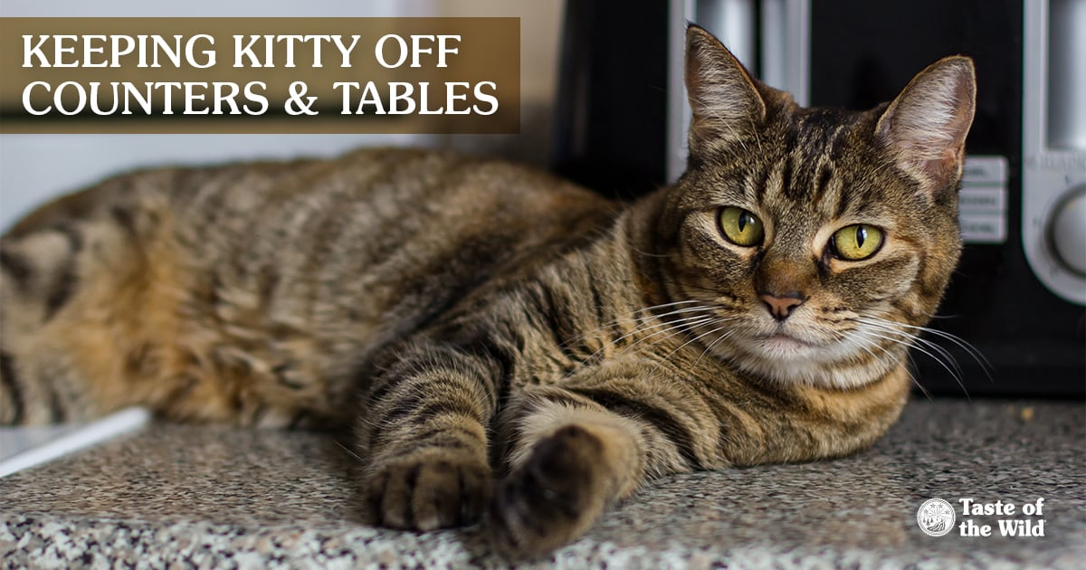 Cat Lying on Kitchen Counter   Taste of the Wild