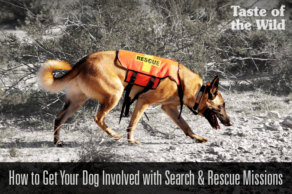 search_rescue