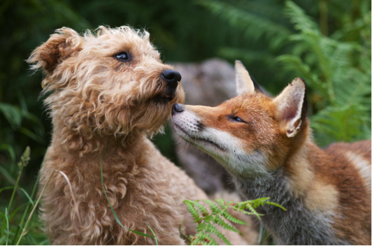 Small breed dogs still have a lot in common with their small canine ancestors, particularly when it comes to nutrition. Photo credit: Richard Bowler