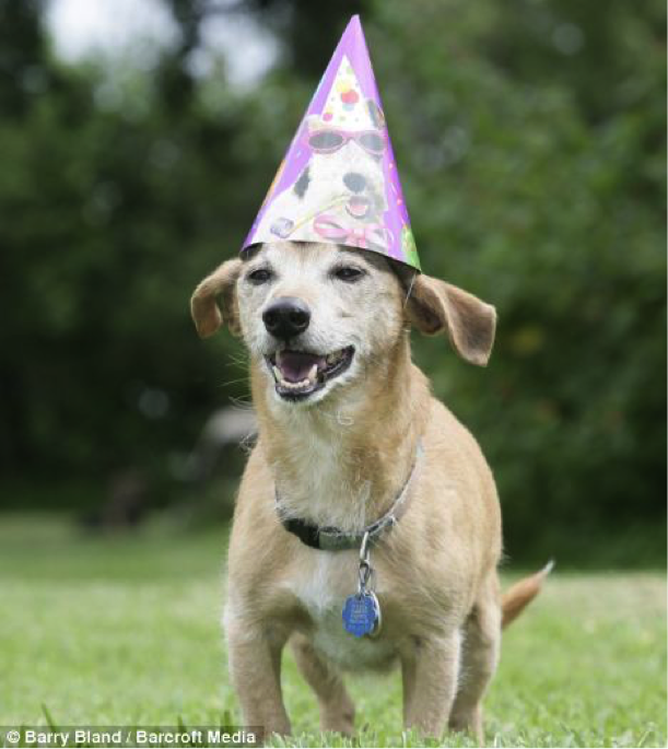 Max, a beagle, dachshund and terrier mix, lived to be almost 30 years old.
