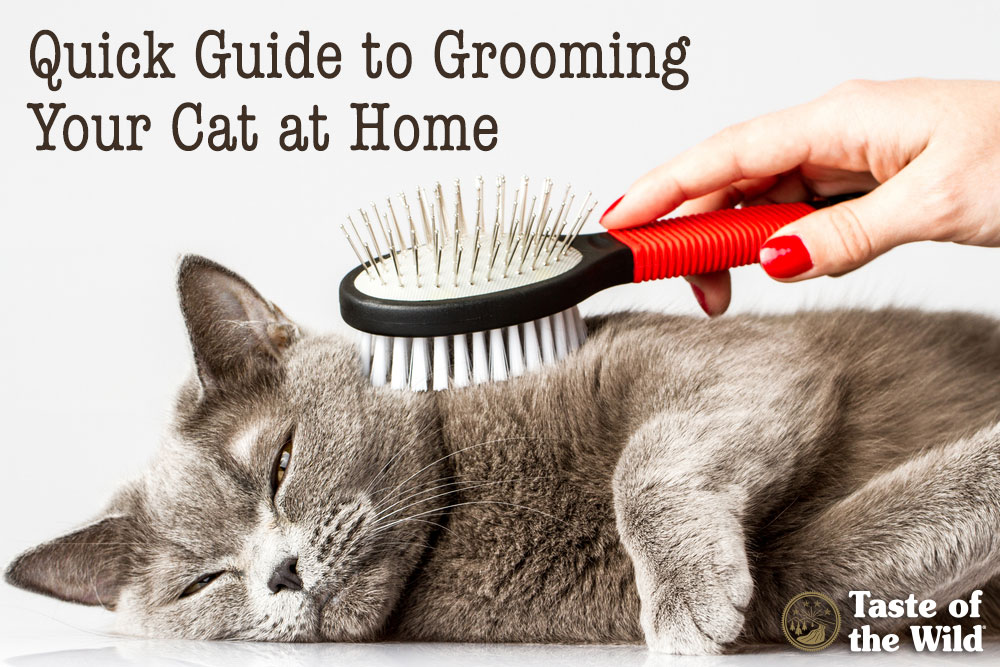 Grooming Your Cat at Home