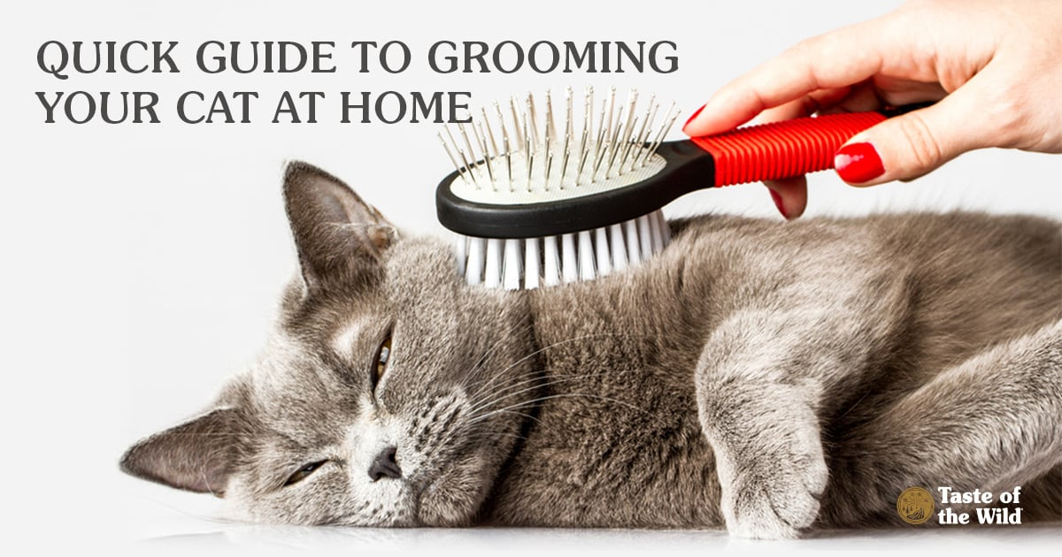 Cat Being Groomed with a Brush | Taste of the Wild