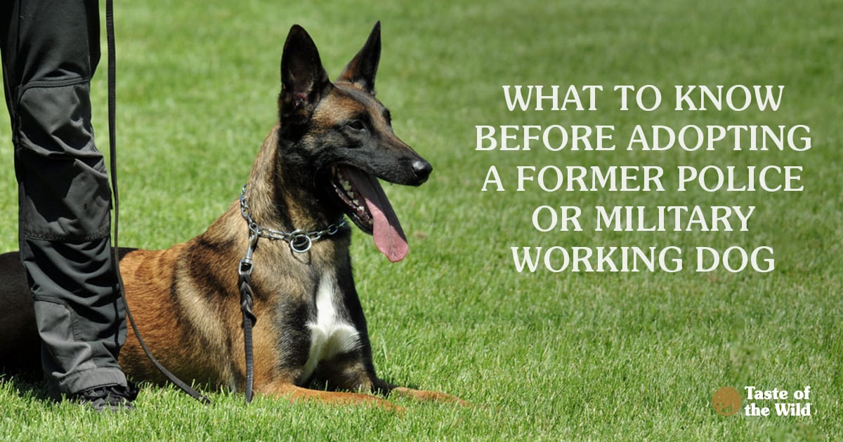 Military Dog Sitting Down | Taste of the Wild