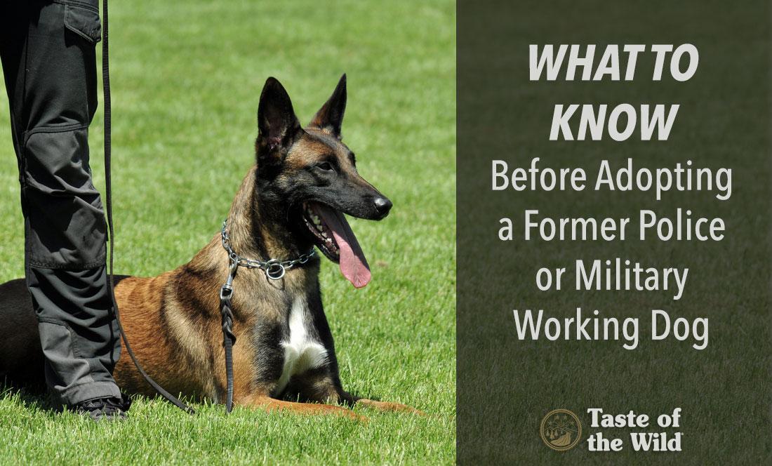 Lackland Afb Military Dog Adoption