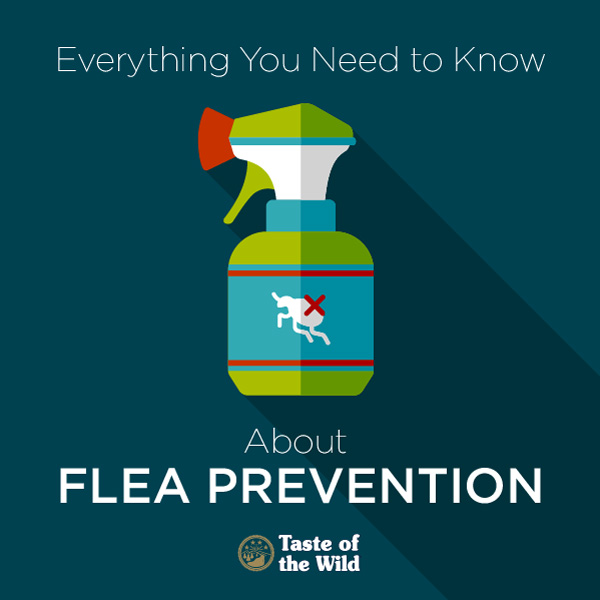 flea prevention