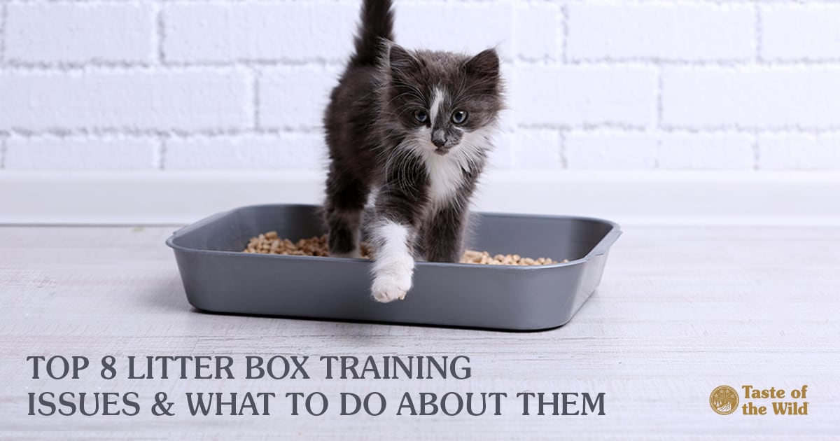 Kitten Stepping Out of a Litter Box | Taste of the Wild