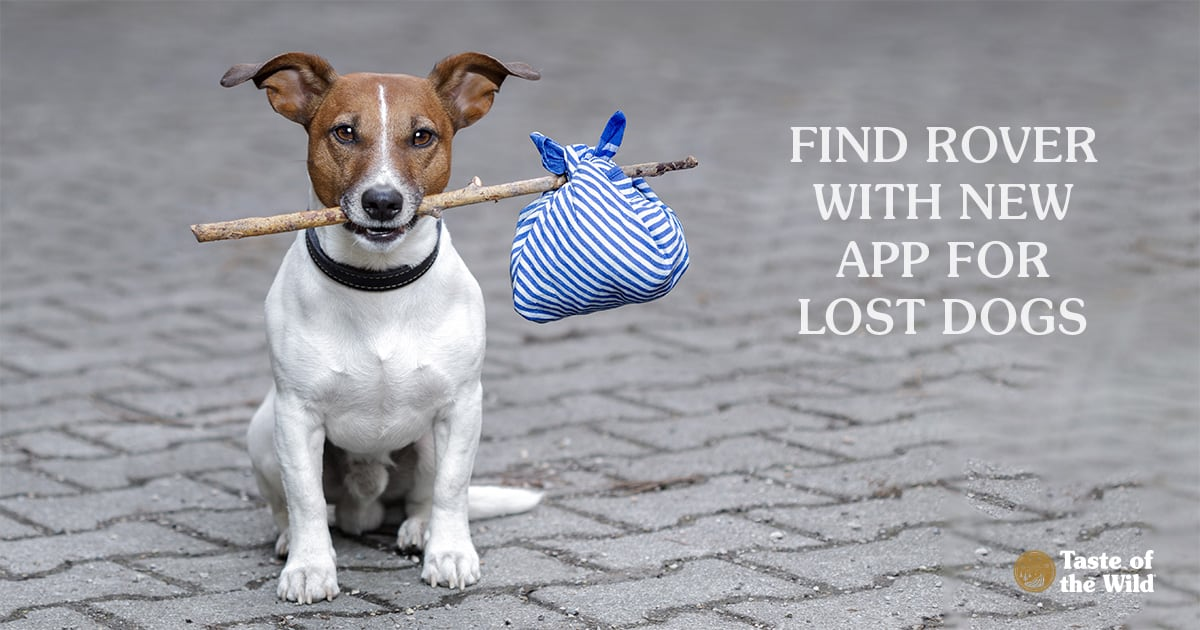 Find Rover with New App for Lost Dogs