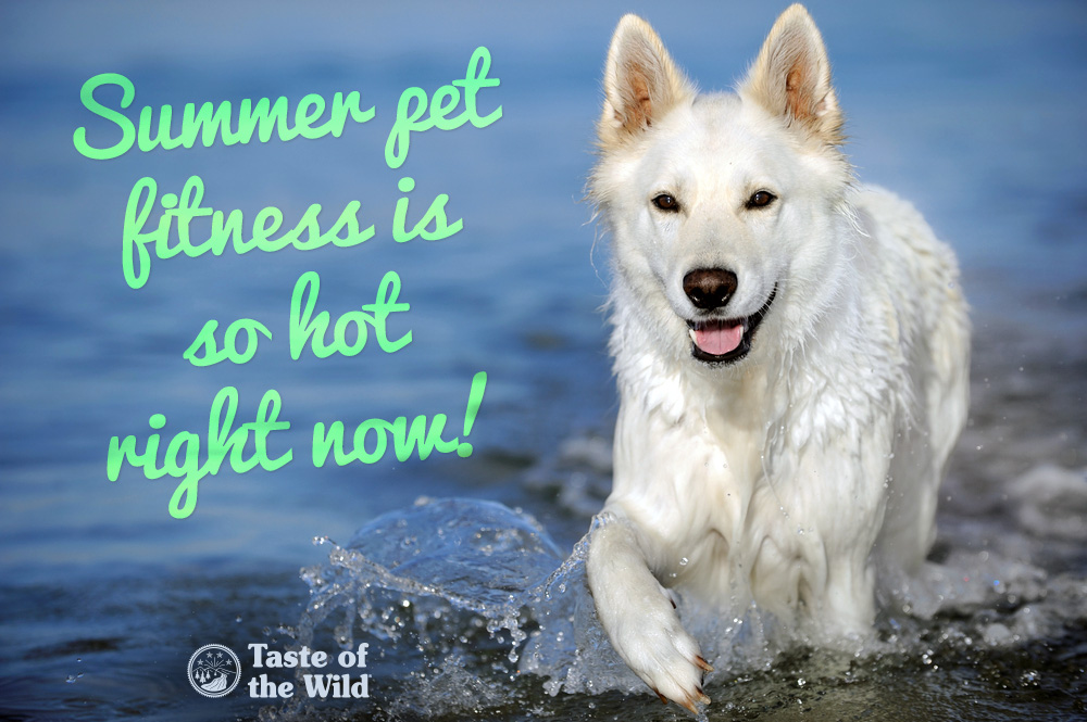 Summer Dog Fitness