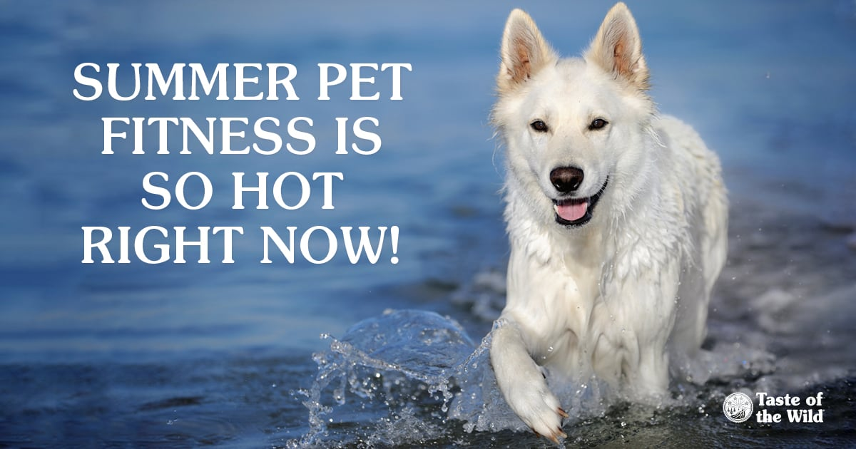 Summer pet fitness is so hot right now! White dog running near water | Taste of the Wild