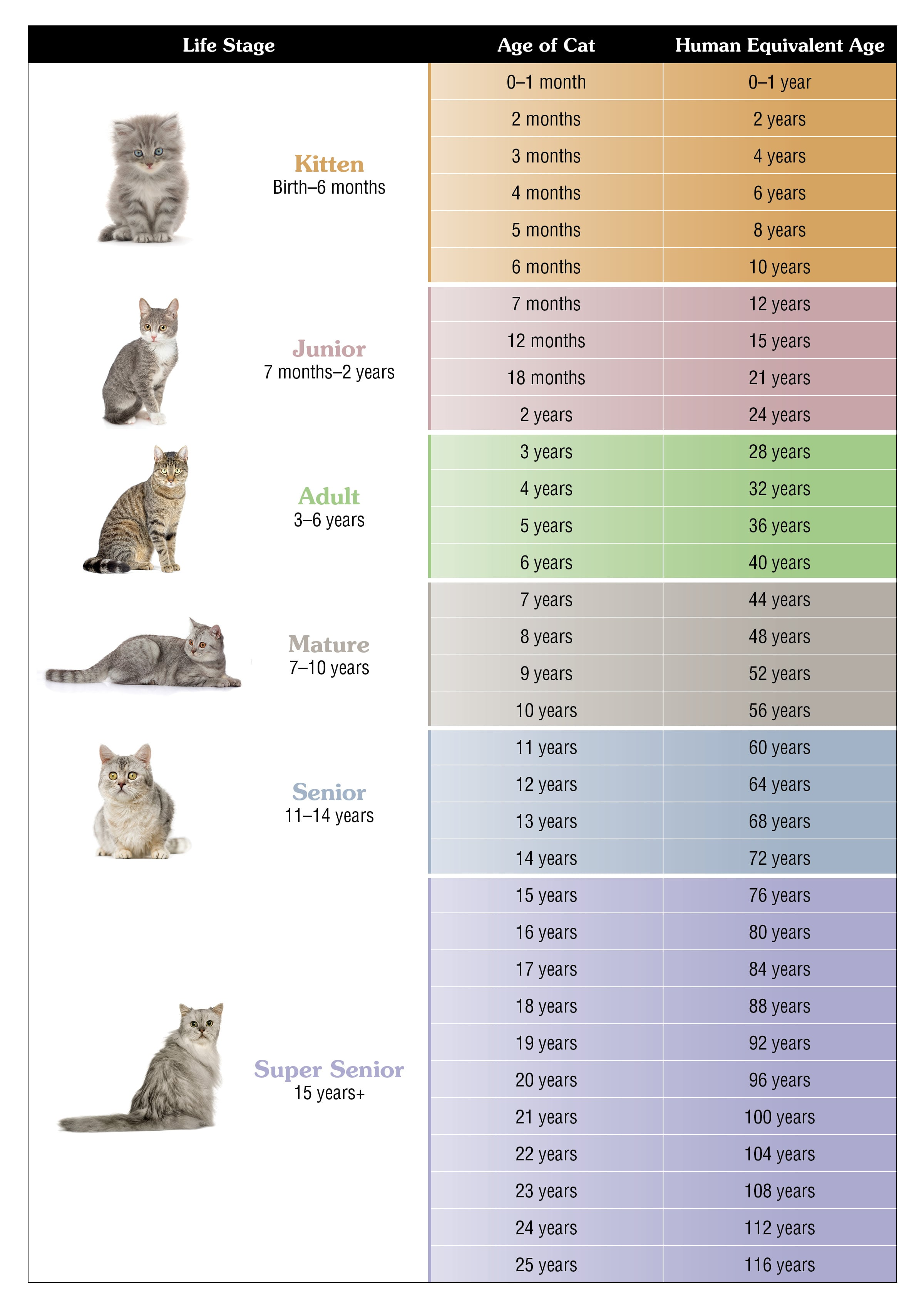 Cat vs. Human Age Chart | Taste of the Wild