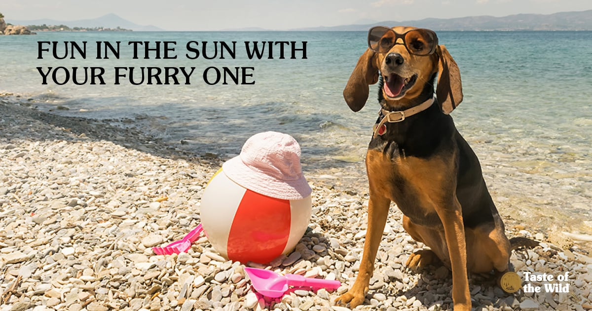 Dog wearing sunglasses sitting on a beach | Taste of the Wild