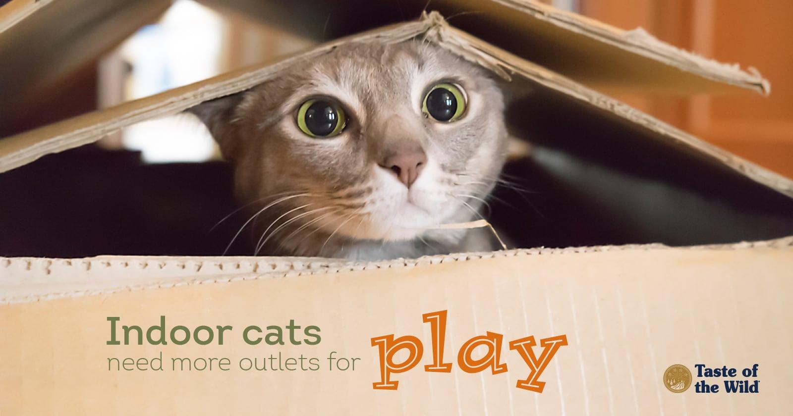 grey cat peeking head out of a box
