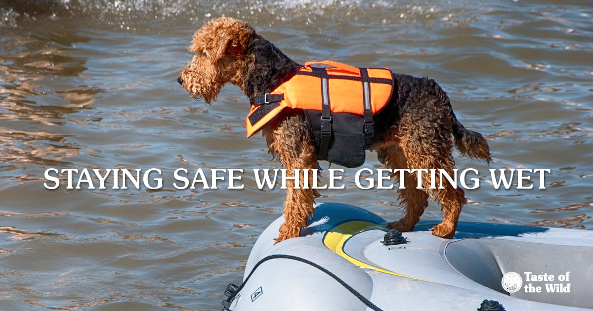 Dog Wearing Life Jacket in an Inflatable Boat | Taste of the Wild