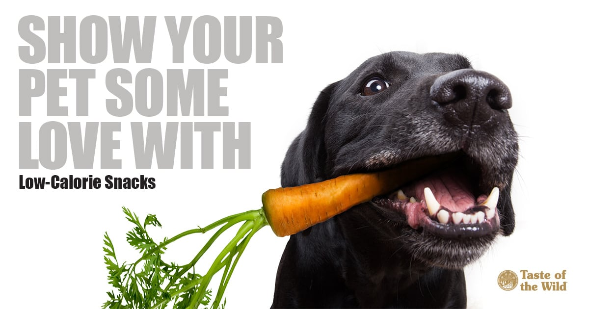 show your pet some love with low-calorie snacks - black labrador type dog eating a carrot | Taste of the Wild