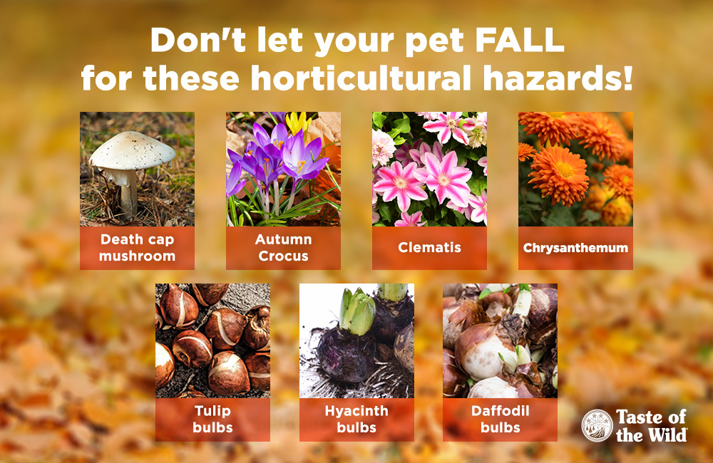 Horticultural hazards