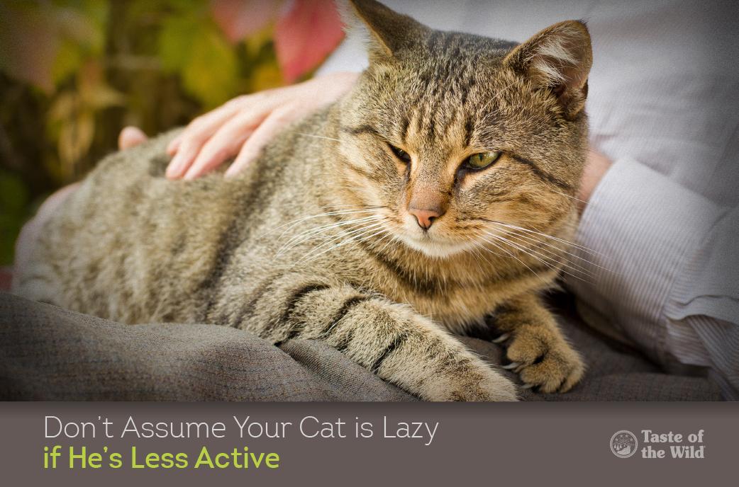 arthritis-in-cats-2