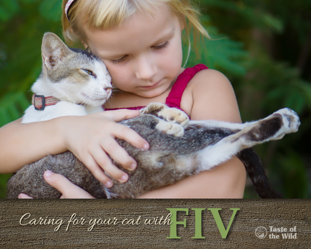 Can Cats Live With Fiv