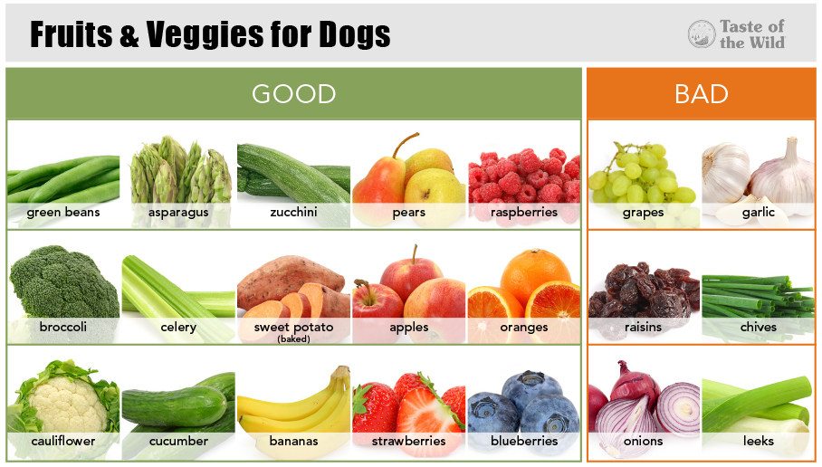 What Vegetables Are Not Good For Dogs