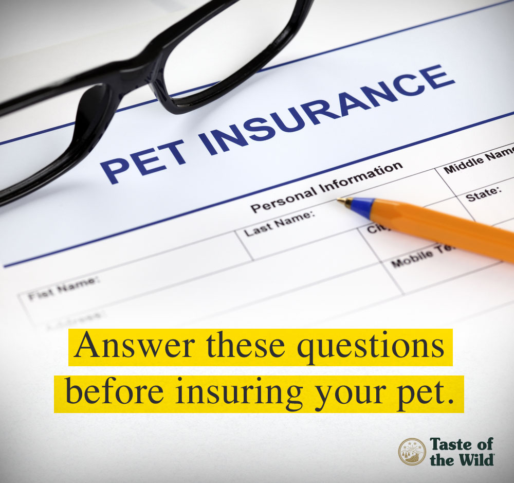 should you buy pet health insurance   taste of the wild pet foodtaste