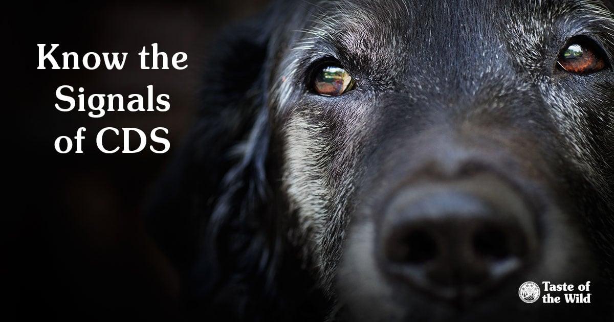 Close-Up Photo of Senior Dog | Taste of the Wild