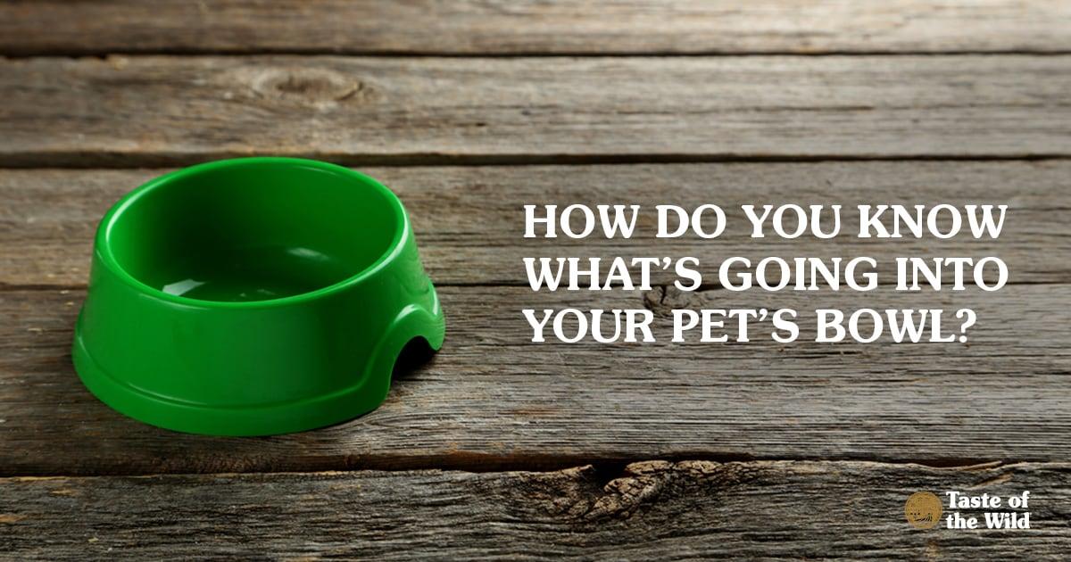Empty Pet Food Bowl on Wooden Floor | Taste of the Wild