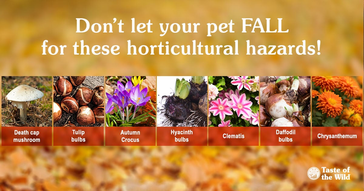 Horticultural Hazards for Pets Chart | Taste of the Wild