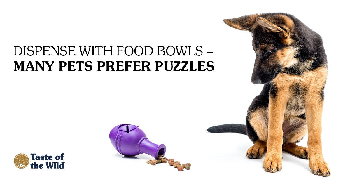 German Shepherd sitting next to purple food toy