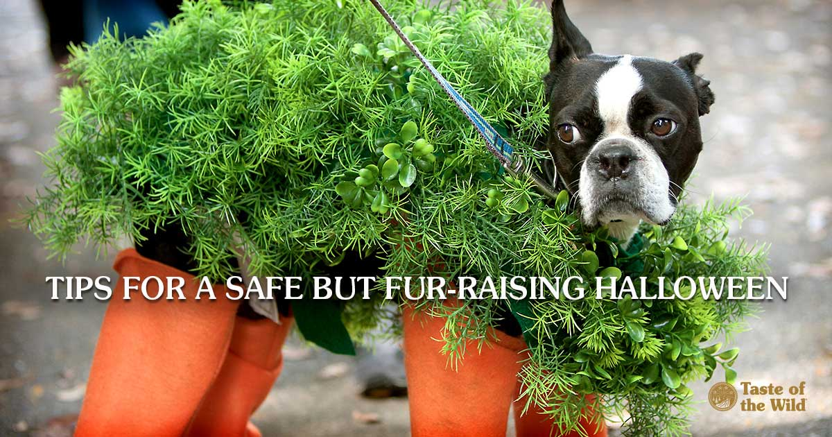 Dog Dressed as Potted Plant for Halloween | Taste of the Wild