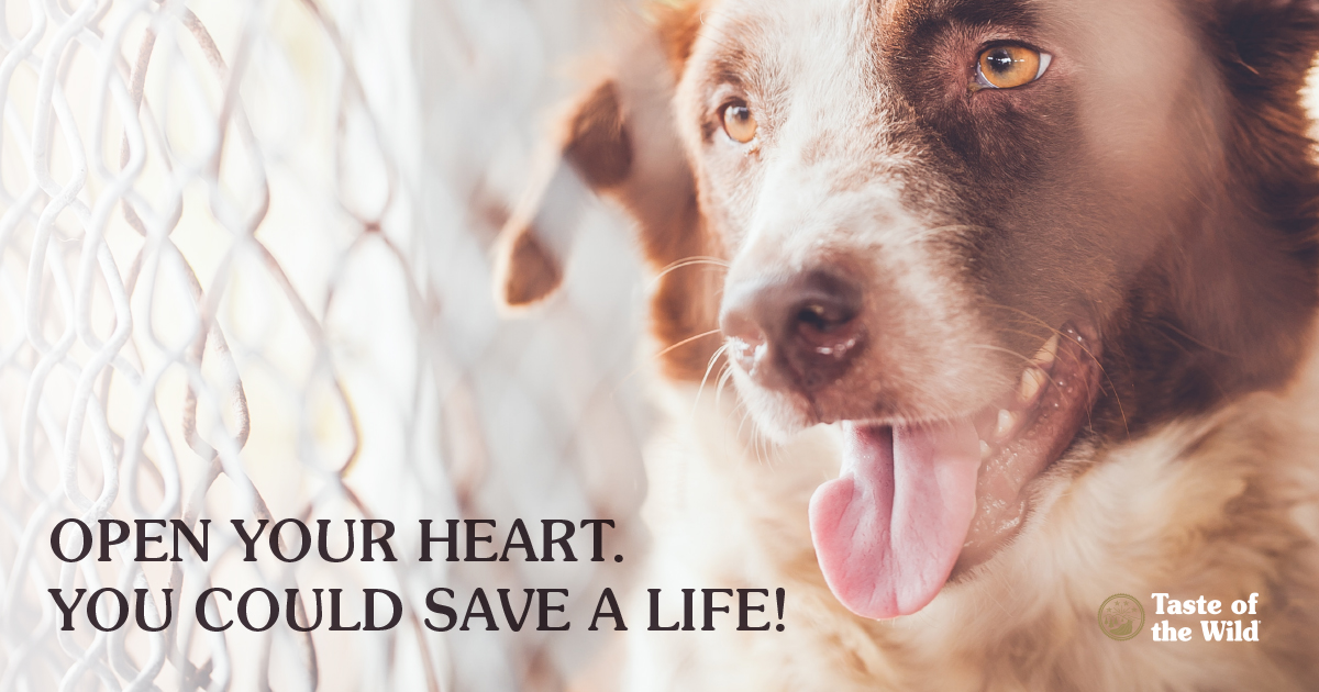 pets with chronic illness