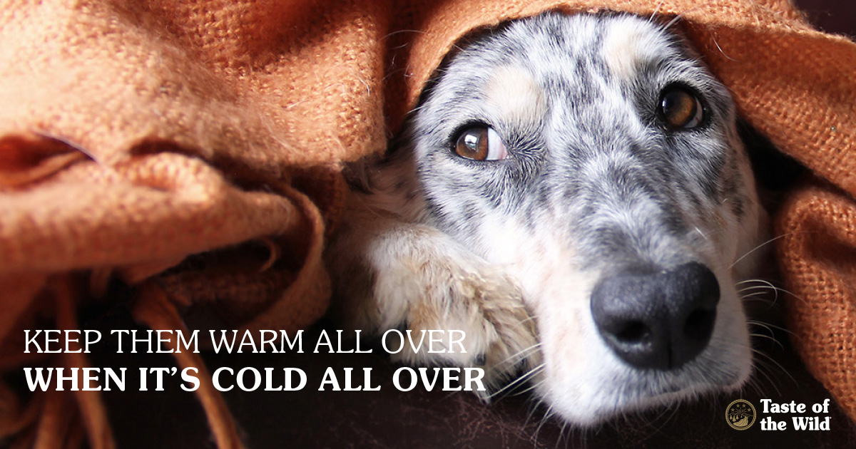 Cold Weather Care for Pets