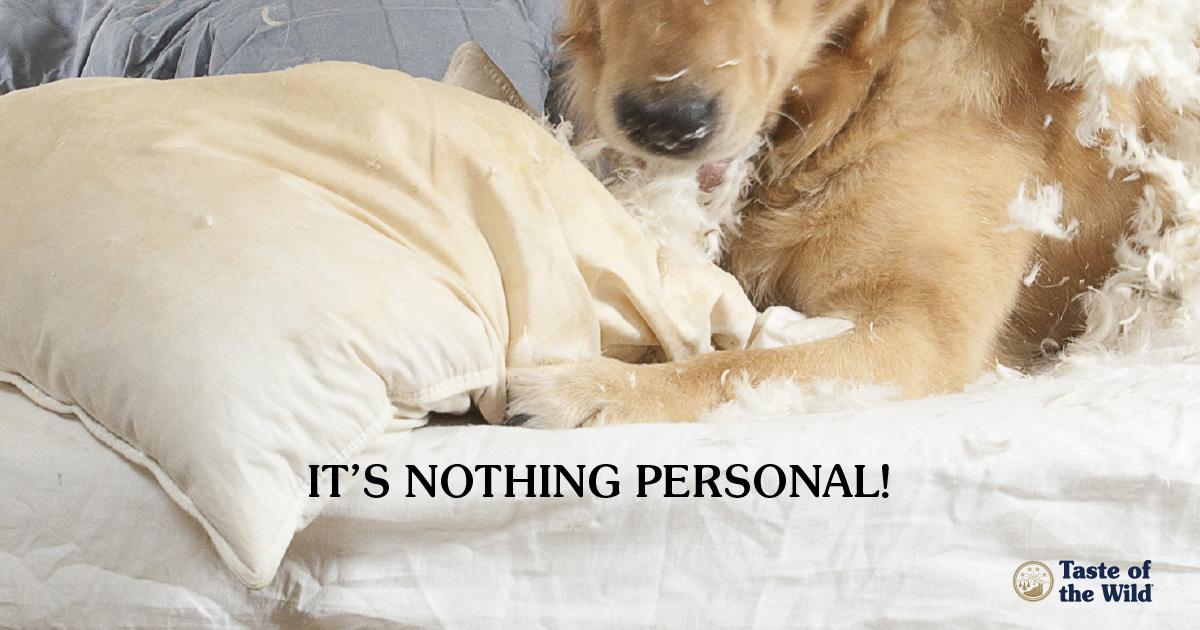 Destructive behavior in pets