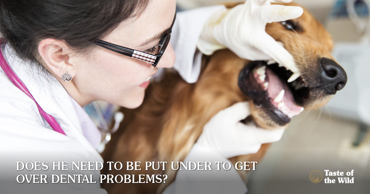 Pet anesthesia