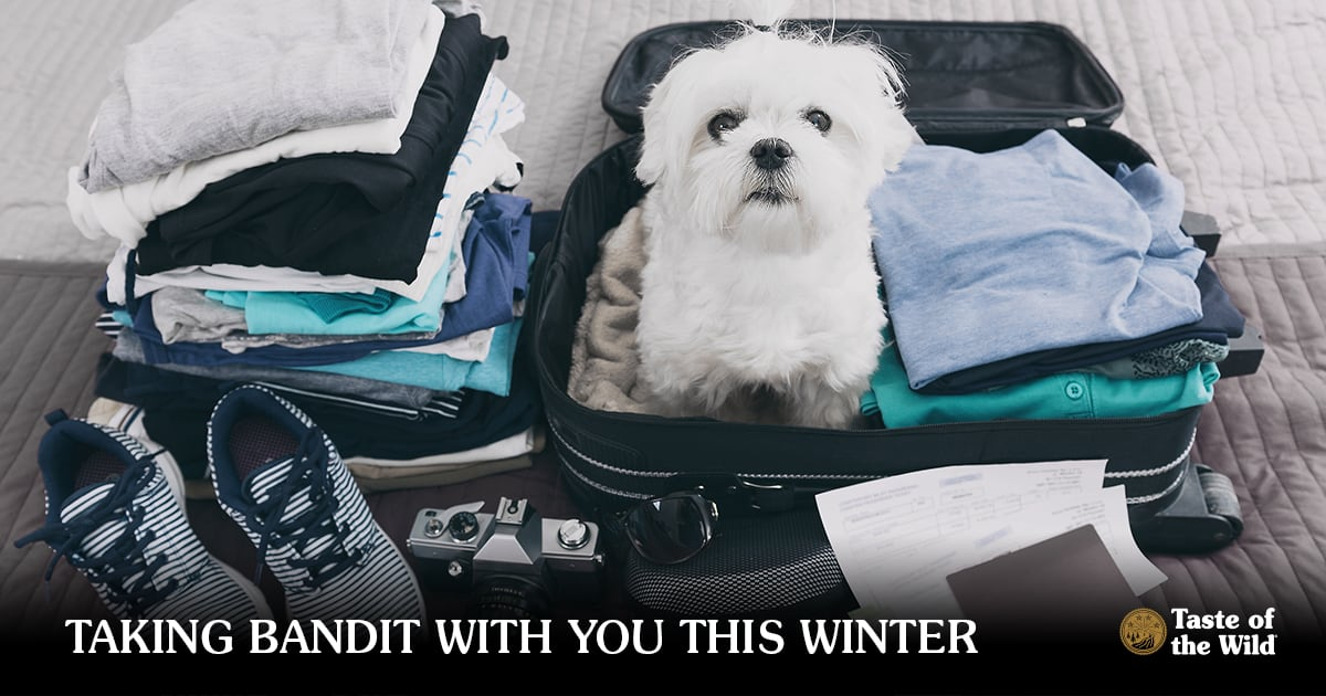 White dog sitting in suitcase