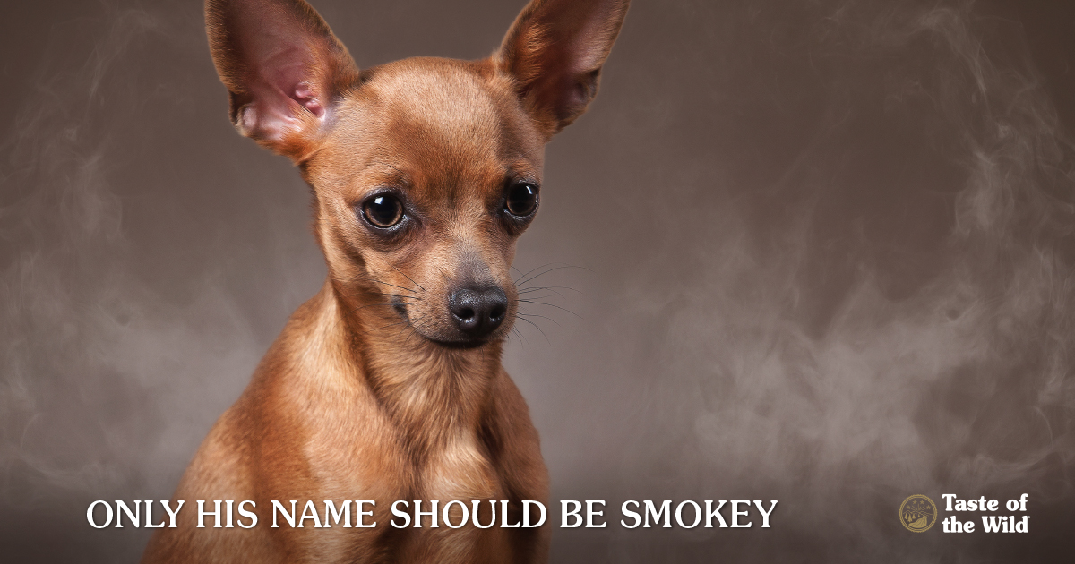 secondhand smoke in pets