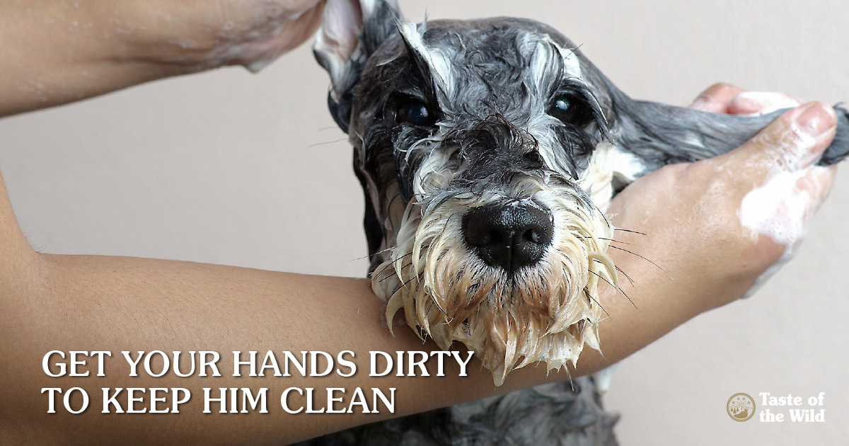 Home pet-grooming tips