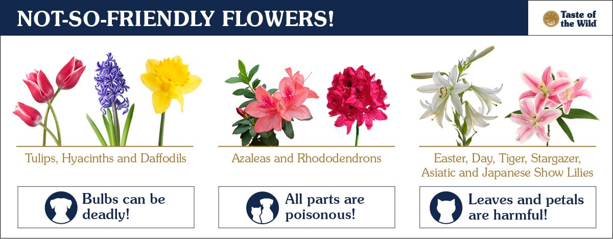 No-So-Friendly Flowers for Pets Chart   Taste of the Wild