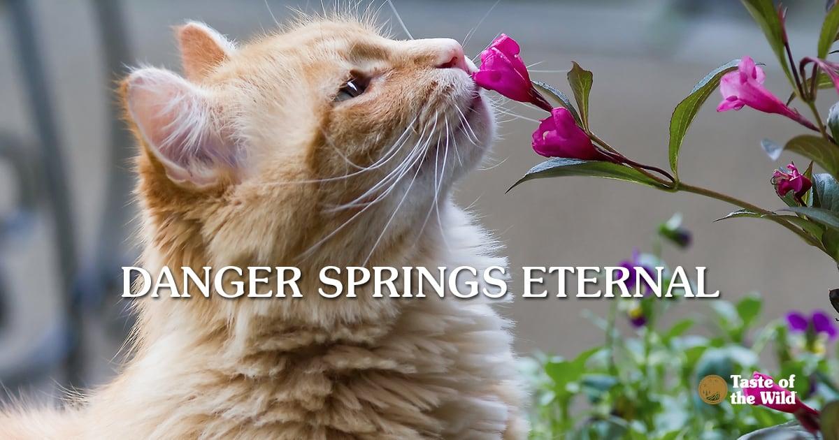 Orange Cat Sniffing Flowers   Taste of the Wild