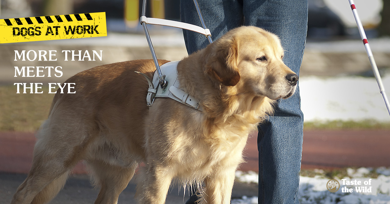 Where Are The Seeing Eye Dogs Trained