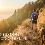 Dogs for Active Owners