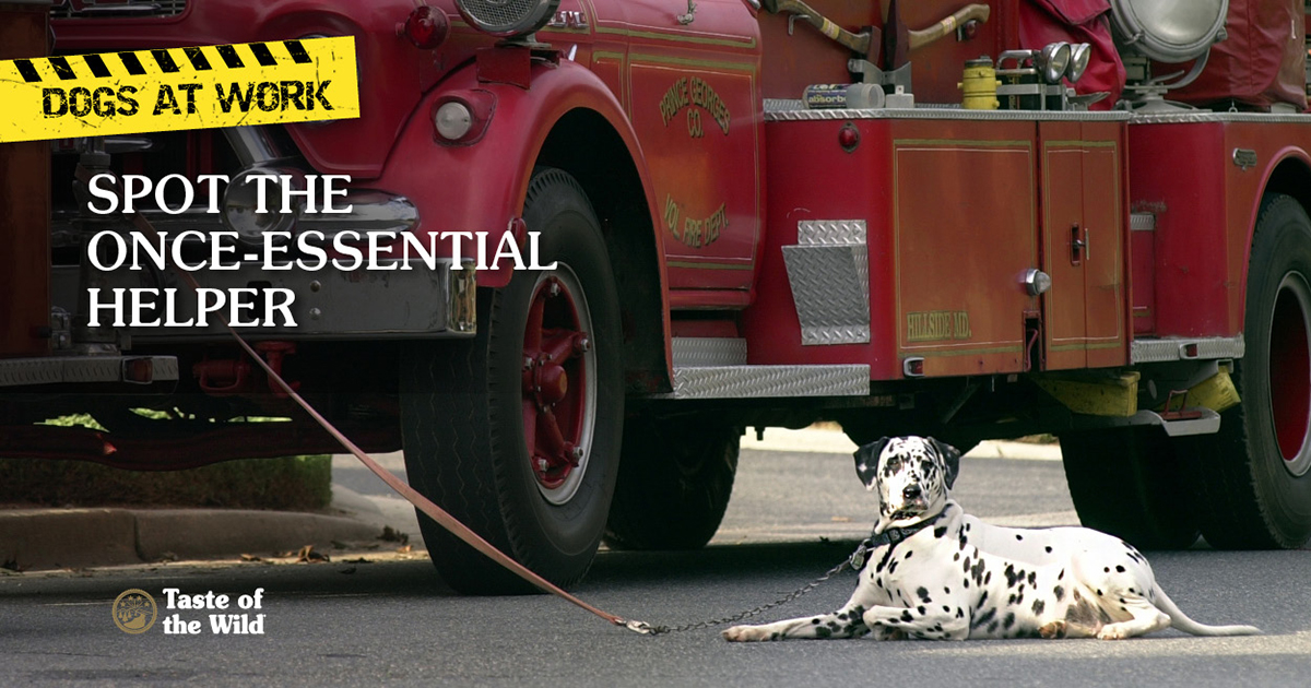 Firehouse Dogs
