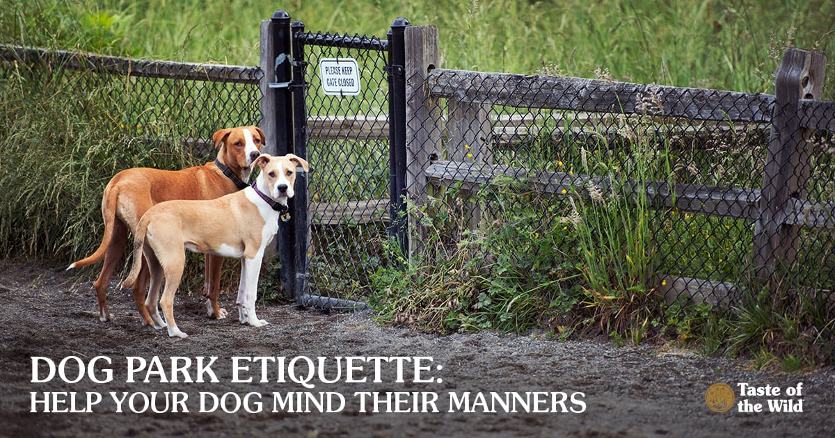 Two medium sized dogs standing at a dog park entrance