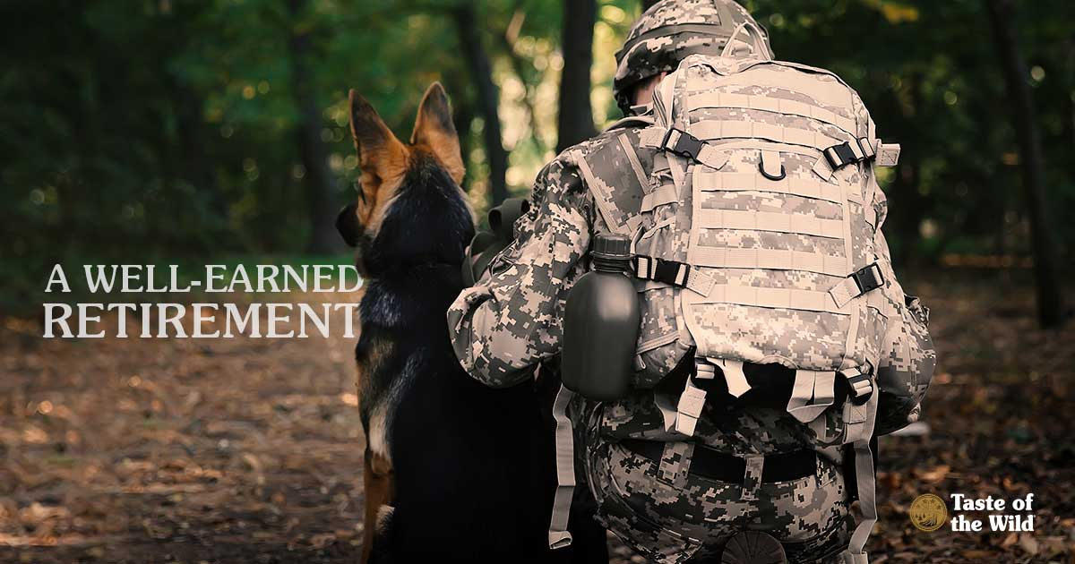 What Happens to Military Dogs When They Retire? - Taste of