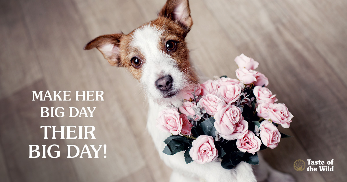 52889fab84c7 8 Ways to Pamper Your Dog Mom This Mother's Day - Taste of the Wild ...