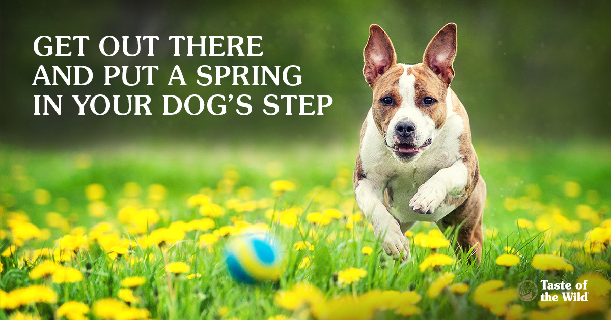 Get out there and put a SPRING in your dog's step