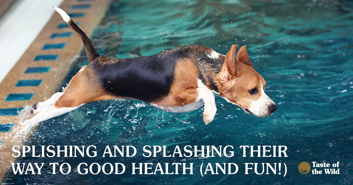 canine aquatics