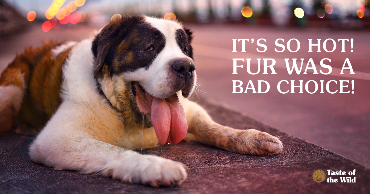 Canine Dog Heatstroke Prevention