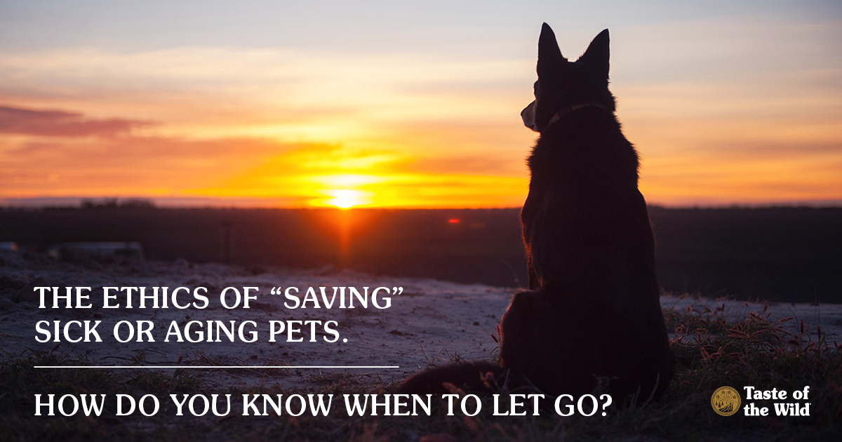 "Ethics of ""saving"" sick or aging pets"