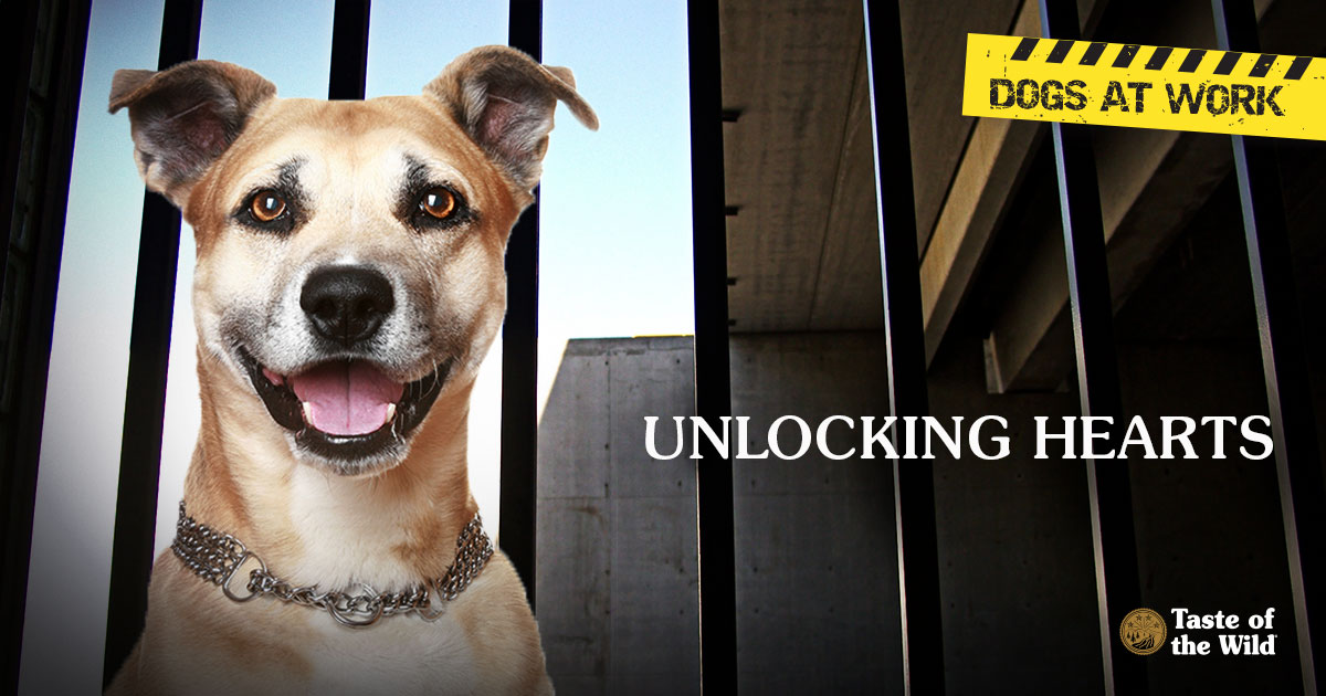 Dogs at work: Unlocking hearts | Taste of the Wild